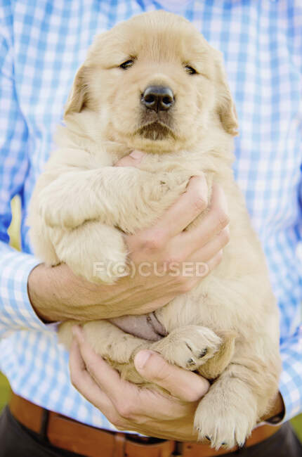 Close up man holding Golden Retriever puppy — Stock Photo