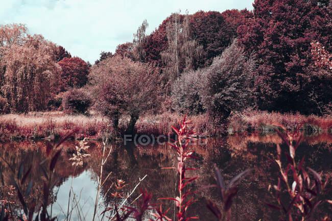 Árboles rojos vibrantes y estanque, Museum Insel Hombroich Park, Neuss, Renania del Norte-Westfalia, Alemania - foto de stock