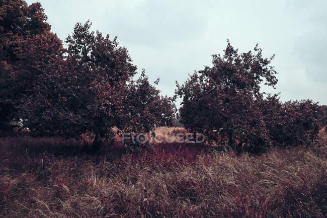 Hojas rojas de otoño y hierba, Museum Insel Hombroich Park, Neuss, Alemania - foto de stock
