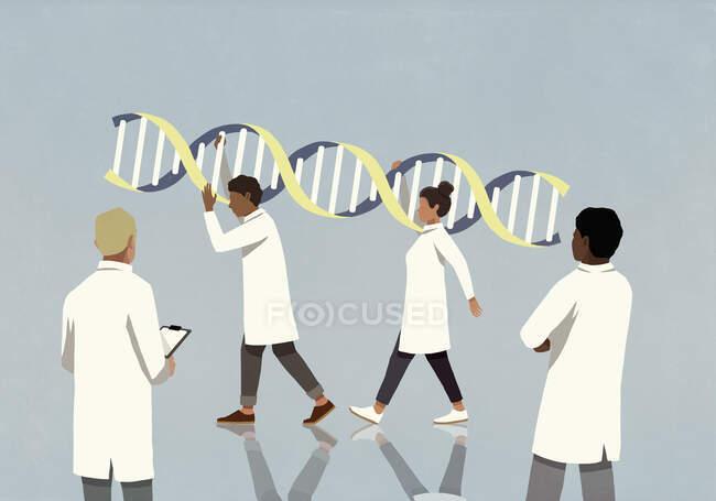 Лікарі в лабораторних покриттях з великою подвійною спіраллю. — стокове фото