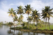 Перегляд тропічних пальм на березі проти води денний час — стокове фото