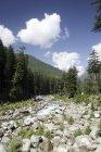 Visão da paisagem com árvores e montanhas no fundo durante o dia, Manali, Himachal Pradesh, Índia, Ásia. — Fotografia de Stock