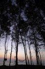 Гамак среди деревьев — стоковое фото
