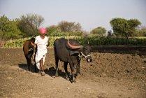 Женщина-фермер с Буллок и Буффало. Salunkwadi, Амбажогаи, бид, Махараштра, Индия — стоковое фото
