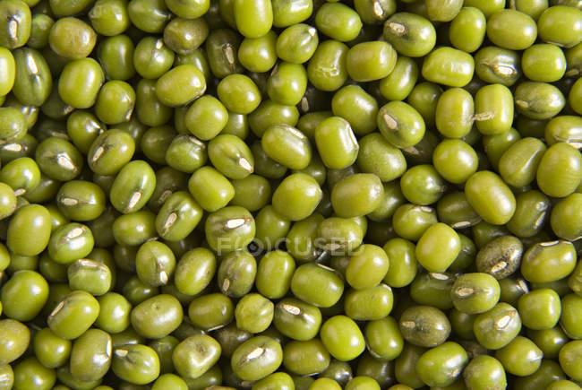 Сирих зелених грам — стокове фото
