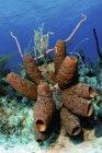 Grupo esponja tubo marrón - foto de stock