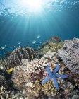 Estrella de mar en el arrecife en el Parque Nacional Komodo - foto de stock