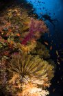 Diver swimming by soft corals — Stock Photo
