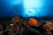 Muelle de la sal sobre la parte superior del arrecife - foto de stock