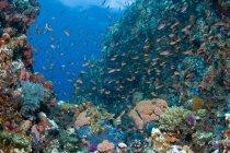 Scena della barriera corallina con coralli e pesci — Foto stock