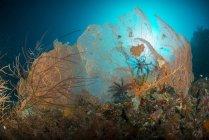 Pareja de abanicos de mar gorgonianos naranjas - foto de stock