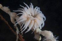 Copa de pólipos de coral bajo repisa - foto de stock