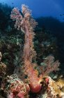Morbido paesaggio marino in corallo — Foto stock