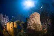 Coral y arrecife de esponja - foto de stock