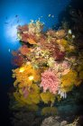Colorful coral reef seascape — Stock Photo