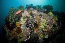 Escena colorida de arrecife con mero rojo - foto de stock