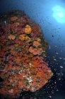 Riffszene mit Korallen und Fischen — Stockfoto