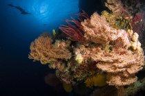 Abanicos y látigos en el arrecife - foto de stock