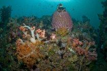 Scène récifale avec coraux et crinoïde jaune — Photo de stock