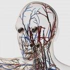 Ilustración médica de arterias, venas y sistema linfático de la cabeza - foto de stock