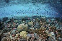 Coloridos peces nadando por encima de los corales - foto de stock