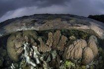 Korallenriff wächst in flachem Wasser — Stockfoto