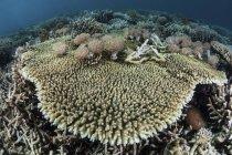 Таблица Коралл с мягких кораллов — стоковое фото