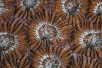 Pólipos de coral tiro de primer plano — Stock Photo