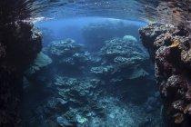Korallen gedeihen am Riff auf den Salomonen — Stockfoto