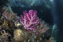 Мягкие кораллы, растущие на известняковом рифе — стоковое фото