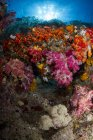 Soft corals in Raja Ampat — Stock Photo