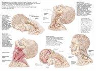 Historial médico con el rango de lesiones en el cuello humano - foto de stock