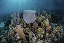 Gorgonians з риф будівлі коралів на риф — стокове фото