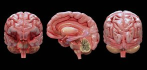 3D rendering of human brain on black background — Stock Photo