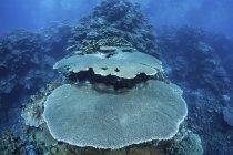 Recifes de corais no Recife — Fotografia de Stock