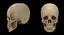 Representación 3D de cráneos humanos sobre fondo negro - foto de stock