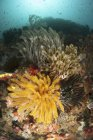 Colorful seascape with crinoids — Stock Photo