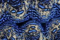 Барвисті гіганта clam крупним планом постріл — стокове фото