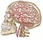 Anatomy of human skull, eyeball and arteries to brain — Stock Photo