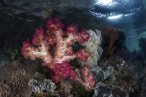 Soft corals growing on limestone island — Stock Photo