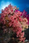 Corales blandos en Raja Ampat - foto de stock