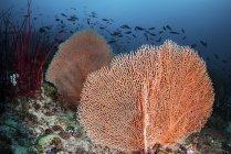 Море поклонников и Рыба кораллового рифа — стоковое фото