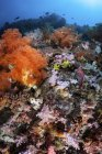 Scorpionfish hiding among soft corals — Stock Photo