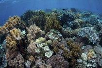 Coral reef in Komodo National Park — Stock Photo