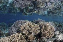 Korallenriff im flachen Wasser — Stockfoto