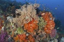 Peces nadando sobre coloridos arrecifes de coral - foto de stock
