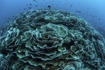 Los corales están empezando a blanquear el arrecife en Indonesia - foto de stock