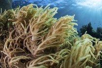 Colônia de corais moles no recife — Fotografia de Stock