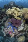 Кораллы на рифе с морской звездой в Индонезии — стоковое фото