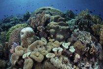 Arrecife de coral en el Parque Nacional Komodo - foto de stock